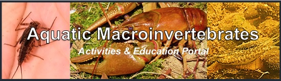 Aquatic Macroinvertebrates photos