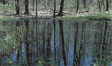 Figure 111-1, Small woodland ponds are critically needed by several species of frogs and toads.