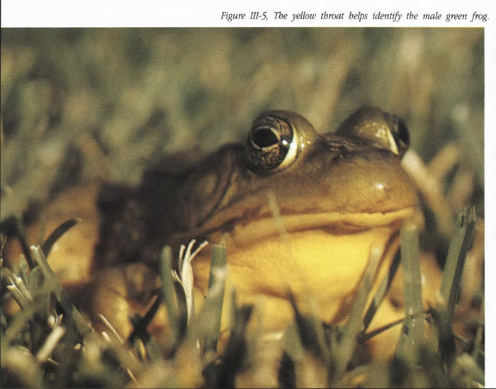 The Frogs and Toads