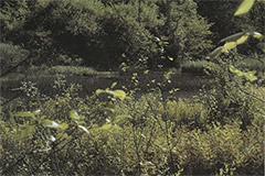 Figure IV-3, Wetlands are crucial to the survival of many species of turtles.